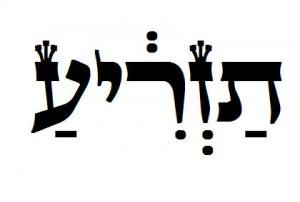 Torah Pearls Tazria, Leviticus, Nehemia Gordon, Torah portion, seed, uncleanness, birth, boy, girl, leprosy, Miriam, Naaman, tanakh, yehovah